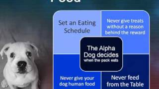Home Dog Obedience Training - 3 Crucial Factors