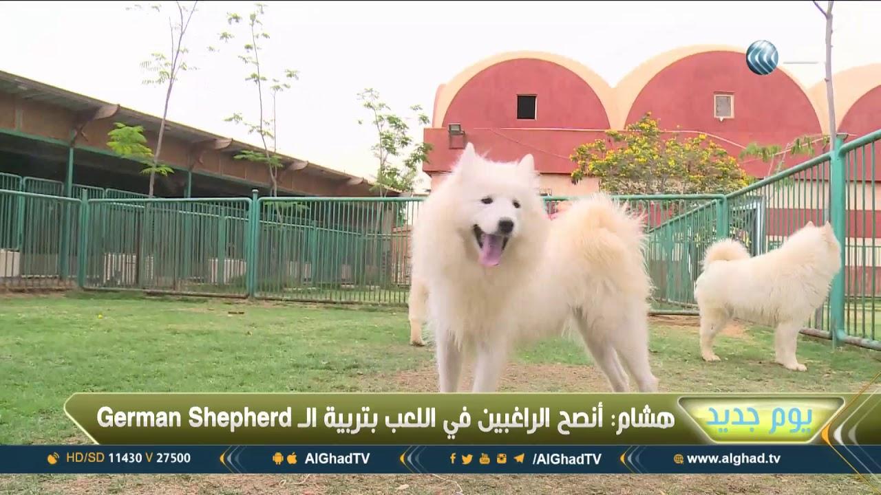 يوم جديد ثاني أكبر مزرعة للكلاب بالوطن العربي في مصر Youtube