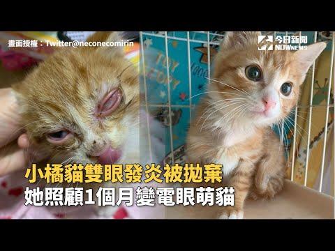 小橘貓雙眼發炎被拋棄 她照顧1個月變電眼萌貓