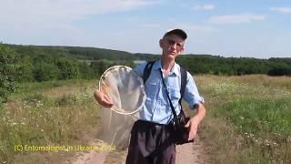 Экскурсия Энтомолога: Цветы и Животные в Степи и Лесостепи Украины