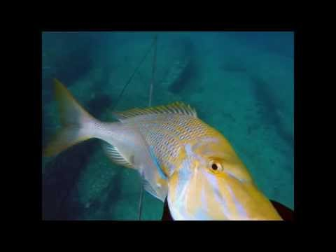 spearfishing south east Queensland