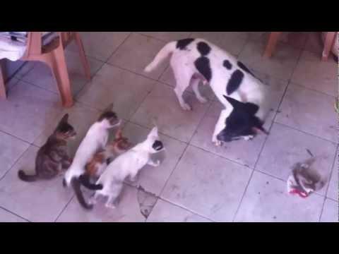 "Chuyện lạ: ""Mẹ"" cún cho mèo ""con"" bú sữa"