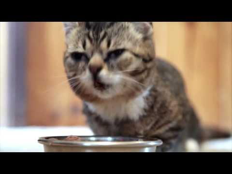 HEY BUB CHECK IT OUT: FOOD