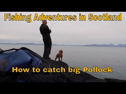 Fishing Adventures In Scotland-How To Catch Big Pollock On Lures.