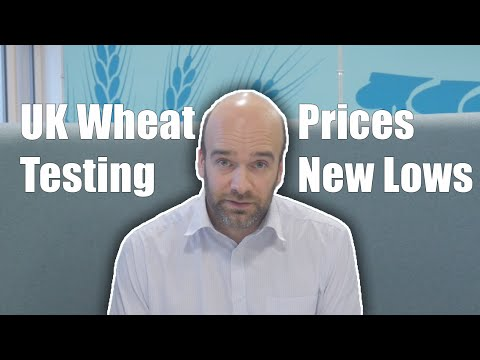 UK Wheat Prices Testing New Lows