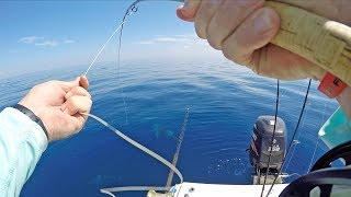 EPIC Fly Fishing Challenge | Fast Fish vs SHARKS!