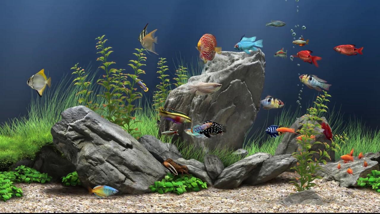 パソコンの画面を水槽にして泳ぐ熱帯魚を選べる ドリームアクアリウムスクリーンセイバー Dream Aquarium Screensaver Youtube