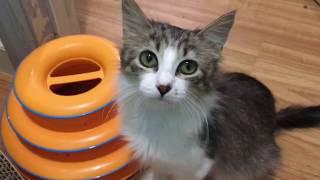 Kitten Spays, Kitten Visitations & Bonus Updates On Former Foster Kittens
