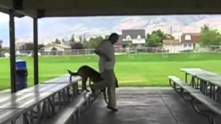 Utah Dog Training- Boot Camp Board And Train