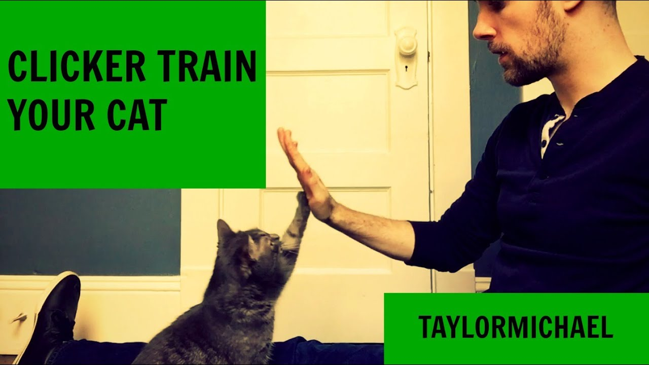 How To Clicker Train A Cat Youtube