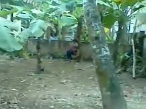 Dân chơi Cao Viên-Thanh Oai Hà Nội đứt dây