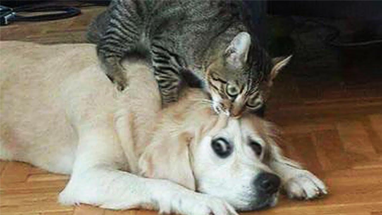 Смотреть Смешное Видео Животные |  Я Ржал Пол Часа/Смешные Животные, Коты Собаки
