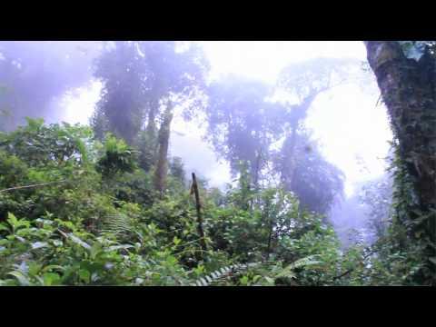 Panama | The Island Intern Documentary | Part III: Exploring our Backyard