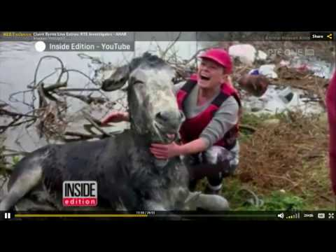 RTE One - Animal Heaven Animal Rescue Investigation