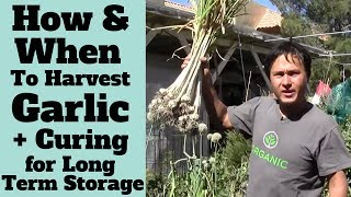 How and When to Harvest Garlic + Curing for Long Term Storage