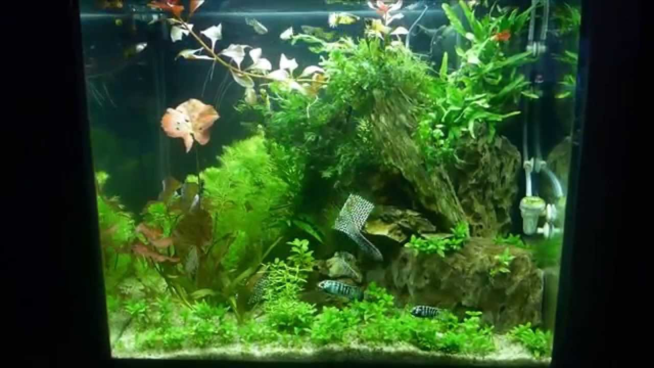 My Juwel Lido 120 Planted Tank Youtube