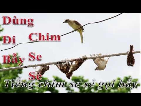 Tiếng Chim Se Sẽ Gọi Bầy