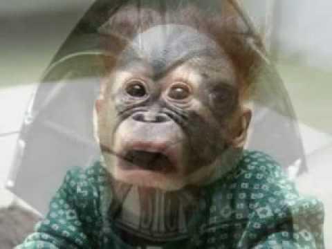 Funny animals pics by twilightnevers