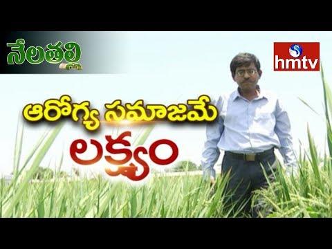 Natural Mango Farming Information Guide By Warangal Ideal Framer | hmtv