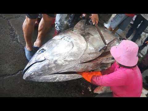 900 Pounds Giant Bluefin Tuna Cutting For Sashimi  Donggang Fish Market Taiwan
