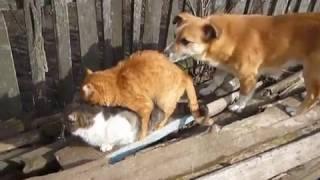 собака и два ненормальных кота