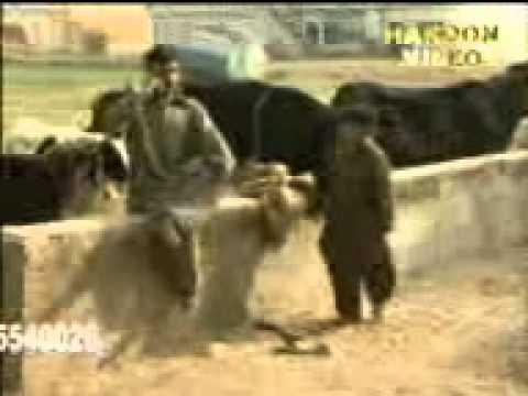 Funny Pothwari Clip ( 7000 Na Mobile Kida)