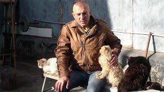 Как совмещать качалку и единоборства(У нас Вы можете заказать индивидуальную программу тренировок по интернету: http://atletizm.com.ua/personalnyj-trener/uslugi Виде..., 2014-11-12T16:09:26.000Z)