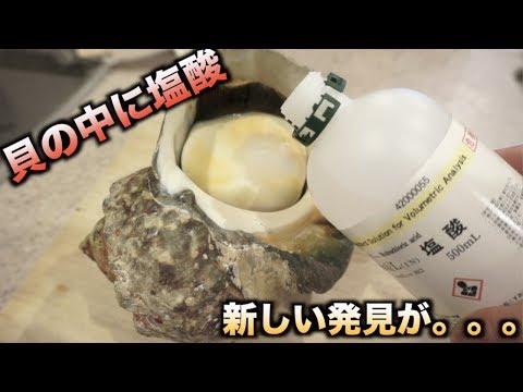 最強の貝の中に塩酸を入れて半日放置した結果。。。