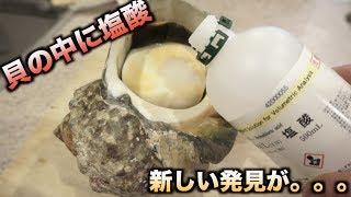 最強の貝の中に塩酸を入れて半日放置した結果。。。 thumbnail