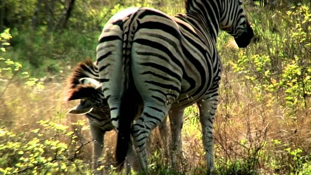 Wild safari 3d trailer