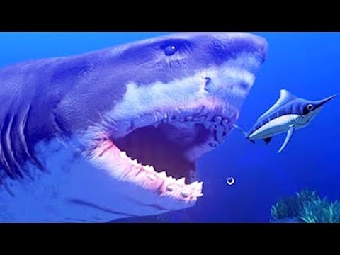 MANG PAR UN IMMENSE REQUIN !   Feed and Grow: Fish !