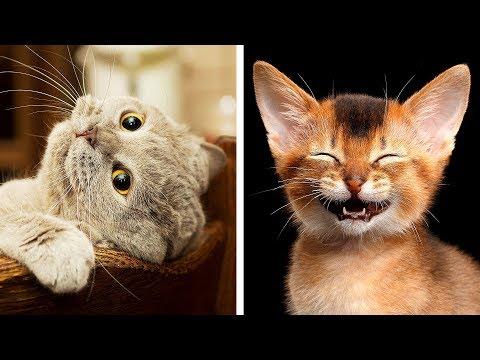 As 10 Raças de Gatos Mais Perigosas do Mundo