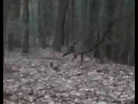 Witch caught on tape near Amherst, MA