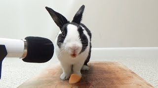 Rabbit tries a juicy cantaloupe for the first time!