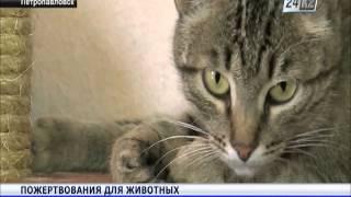 Петропавловские волонтеры организовали движение в поддержку бездомных животных