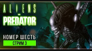 Победа будет наша | Прохождение Aliens vs. Predator 2010