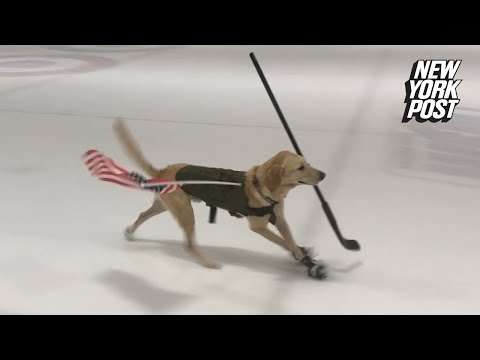 Rich Kaminski - Benny The Rescue Dog Loves To Skate