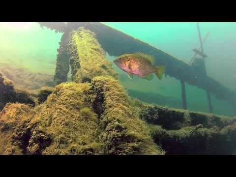 Diving wreck of The Islander 21 Jun 13