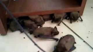 Летучие мыши укрылись от грозы в офисе