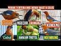 Penyebab Anis Merah Macet Yg Perlu Di Ketahui  Mp3 - Mp4 Download