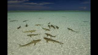 Zwé Nou Lanmisik (Seychelles) - Patrick Victor