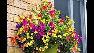 Цветы для украшения БАЛКОНА и уличного окна