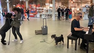 Big Dog Starts Dancing to Boogie Woogie Piano