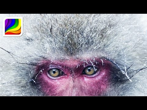 Relaxing music & video 😊 Japanese Snow Monkeys by Visual Wellness