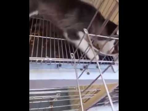 Funny dog eats food very fast (funny)