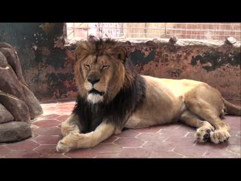 Nacen leones en zoo de Paquistán