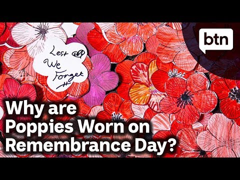 Why are Poppies Worn on Remembrance Day? - Behind the News