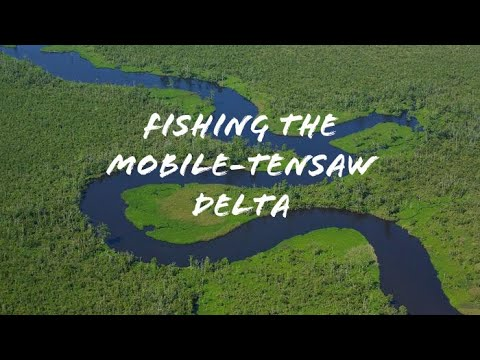 FIRST Time Fishing TIDAL Waters (Mobile-Tensaw Delta)