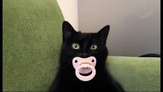 На котиков можно смотреть бесконечно. Приколы с котами и кошками.