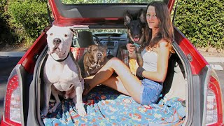 How I live in my Prius with my Girlfriend & Three Pitbulls (Tiny House)